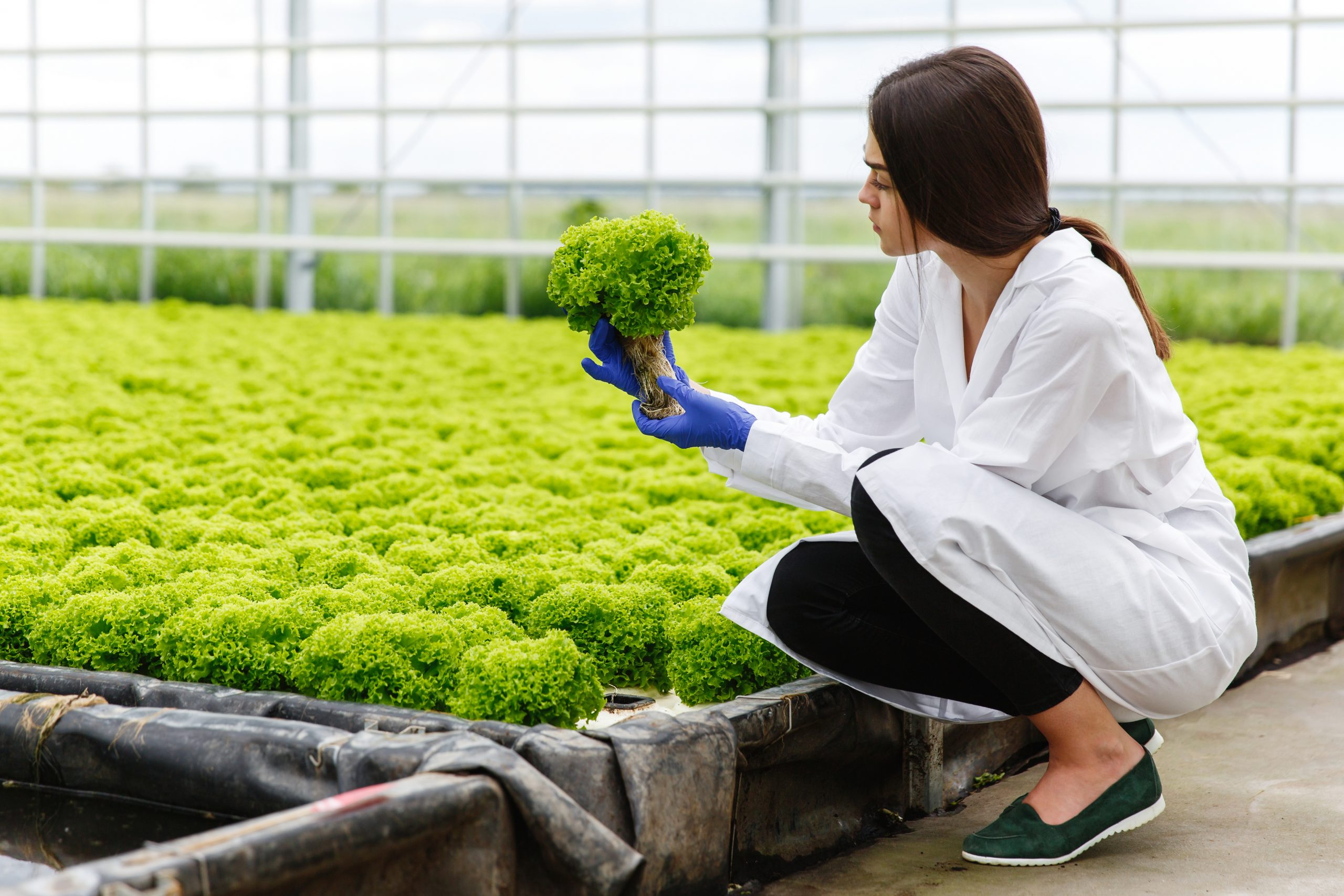 Woman in laboratory robe examines carefully plants in the greenh